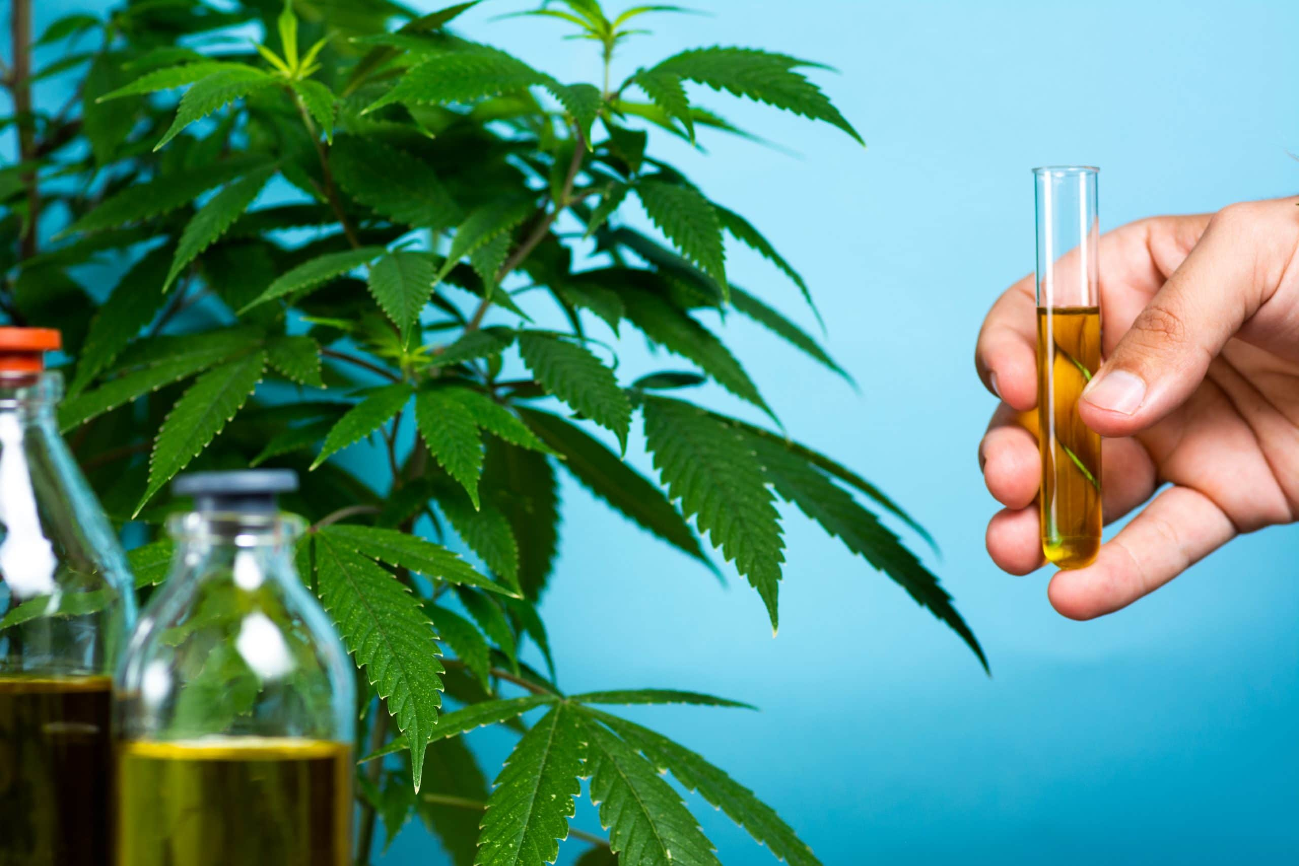 hand-holding-test-tube-of-cannabis-oil-near-plant-and-vials